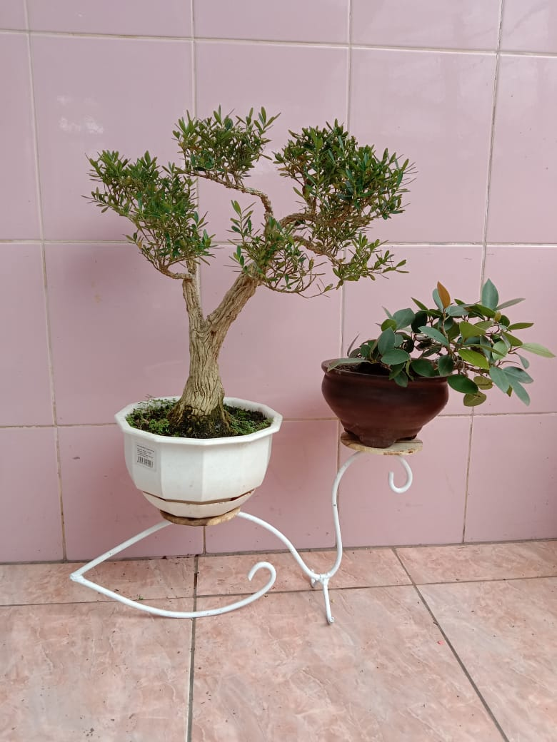 Rak kaktus mini